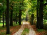 The Gentle Path by jojomercury, Photography->Landscape gallery