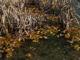 Preddvor by foppa, Photography->Water gallery