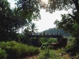 Village bridge at morning by sahadk, photography->bridges gallery