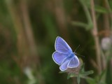 So Blue by cameraatje, photography->butterflies gallery