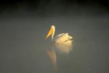 Mist & Light by garrettparkinson, photography->birds gallery