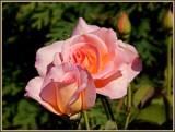 Tiffany by trixxie17, photography->flowers gallery