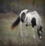 Horse # 3 by picardroe, photography->animals gallery