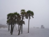 Patient Palms by edoctober, photography->landscape gallery