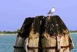 Gull, having a break by mac39, photography->birds gallery