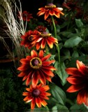 Fall Display by trixxie17, photography->flowers gallery