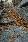 Sycamore Leaves Decorate Stairway by DesertDenizen, photography->nature gallery