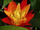Bromeliad by trixxie17, photography->flowers gallery