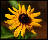 Sun Kissed Yellow by tigger3, photography->macro gallery