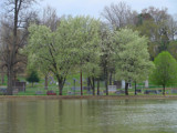 City Park in Bloom Redux by lilkittees, Photography->Landscape gallery