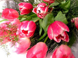 Alive, with Tulips! by marilynjane, Photography->Flowers gallery