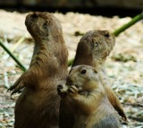 Charlies Angels =) by nessalovesnature, photography->animals gallery