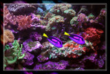 Color Under Water by Jimbobedsel, Photography->Underwater gallery