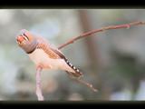 b#1 by kodo34, Photography->Birds gallery