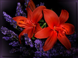 Lilies & Lavender by LynEve, Photography->Flowers gallery