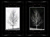 B&W by rvdb, photography->manipulation gallery