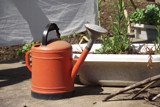 watering can by Fergus, photography->general gallery