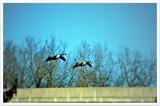 Flight by RL, photography->birds gallery