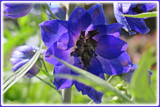 Delphinium by trixxie17, photography->flowers gallery