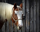 Horse #3 by GIGIBL, photography->animals gallery