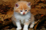 Barnyard Kitty by SatCom, photography->pets gallery