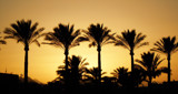 PalmTrees by twinkel, photography->sunset/rise gallery