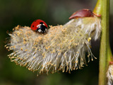 Looking for a place to sleep by Paul_Gerritsen, Photography->Insects/Spiders gallery