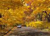 Golden Road by alharkrader, photography->landscape gallery
