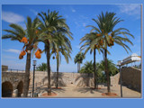 Mediterranean Palm trees by fogz, Photography->General gallery