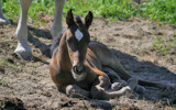 A little foal by MarianaEwa, Photography->Animals gallery