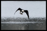 Got It! by garrettparkinson, photography->birds gallery
