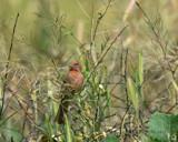 Springtime! by garrettparkinson, photography->birds gallery
