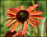 Calendar Lovely by tigger3, photography->flowers gallery