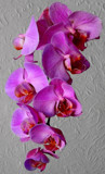 Magic Orchid by braces, photography->flowers gallery