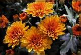 Bronzed by trixxie17, photography->flowers gallery