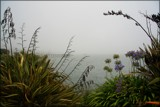 Misty Moeraki by LynEve, photography->shorelines gallery