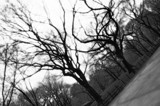 Central Park, Diffused by mn_photog, Photography->City gallery