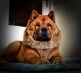 Brutus by JaiJoli, photography->animals gallery