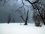 So Cold. So Eerie, So Much Deer Poo! by Jims, Photography->Landscape gallery