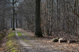 A Path through the Forest by Heroictitof, photography->landscape gallery