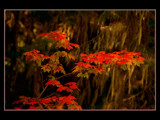 All Fired Up by photoimagery, Photography->Nature gallery