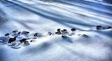 Shadows of a Winter Garden by snapshooter87, photography->gardens gallery