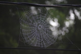 Web on a Wire by timw4mail, photography->insects/spiders gallery