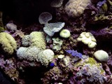 Coral Reef by sublime311, Photography->Underwater gallery