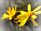 Signs of Spring #1 by LynEve, photography->flowers gallery