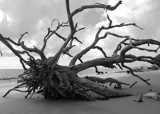 Boneyard Beach B&W by aboogie, Photography->Shorelines gallery