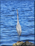 Vantage Point_The Heron by tigger3, photography->birds gallery