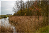 Dutch Wetland by corngrowth, photography->landscape gallery