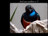 And Your Problem Is ?? by Hottrockin, Photography->Birds gallery