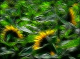 Sunflower Yarn by LynEve, photography->manipulation gallery
